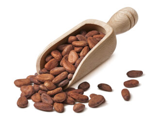 Raw cocoa beans in wooden scoop isolated on white background